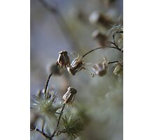 Gentle dance (from wild flowers collection)  Photographic Print