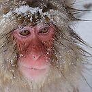 Snow Monkey by wilderpisces