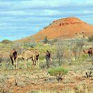Wild Camels 2 by TheGratefulDad