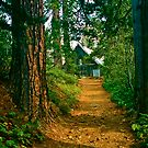A Trail to an Old Barn by Nancy Stafford