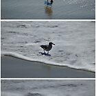 SURF'S IN; SURF'S OUT, (triptych) by Paul Quixote Alleyne