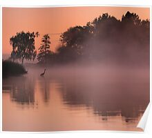 Herons in the mist Poster