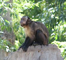 Monkey in Thought by David Shaw