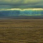 Ngorongoro Crater, Tanzania, Africa by Scootarts