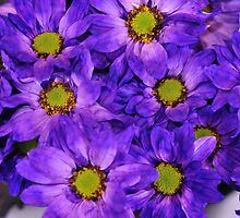 flowers,purple,yellow by Linda Kelley