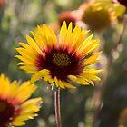 Little Flowers by John Fleming
