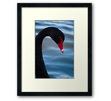 Swan 3 Framed Print