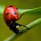 Hang on little ladybird! by Nick Tsiatinis