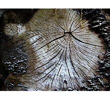 Old and weathered tree trunk  Photographic Print