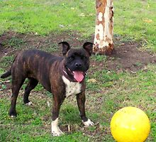 This is my big yellow ball! by dozzam