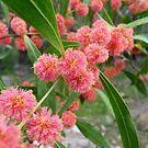 Red wattle by Meg Hart