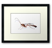 Parasitic Wasp Framed Print