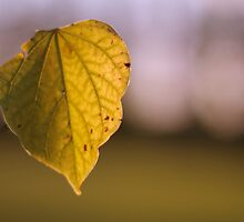One Leaf by Aaron Campbell