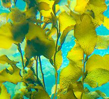 Kelp Forest by Leroy Laverman