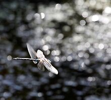 Across the Sea of Stars (Paddle-Tailed Darner) by Wolf Read