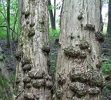 Twin Trees with Galls-CANCER don't you see? by linmarie