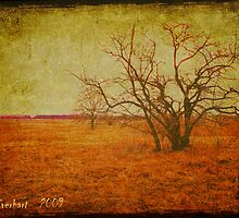 The Red Grass Fields of Spring by Julie Everhart
