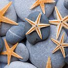 Starfish on a Pebble Beach by Alex  Bramwell