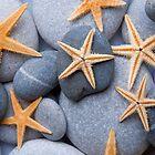Starfish on a Pebble Beach by Alex  Bramwell