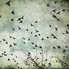 The birds by Tina Smith