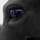 eye of the equine by Lisa Skala