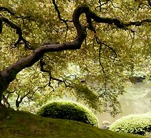 japanese maple by tego53