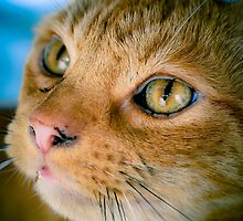 My handsome ginger boy by Pat Shawyer