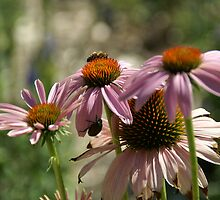 Bee and Beetle Nectar by Bob Spath