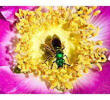 Nature's Palette   Photographic Print
