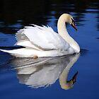 White Swan by Stephen  Van Tuyl