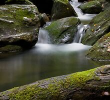 Stoney Fork  (Mineral creek) by Forrest Tainio