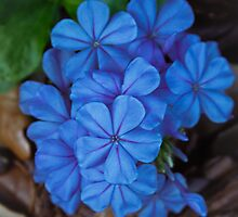 Bluehearts by Jackee Swinson Rand J Photography