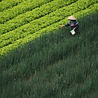 Working the field by Paul McSherry