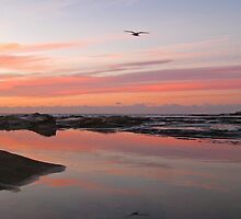 Dee Why Morning by annadavies
