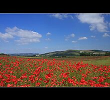 A Last Taste of Summer, Firle, Sussex by Craig Williams