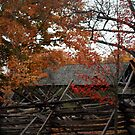 Autumn in Colonial Williamsburg by Terence Russell