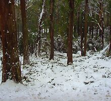 Snow in the woods by Kamalpreet S. Sawhney