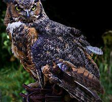 Long Eared Owl by John Absher