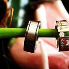 Rings by Louisa Jones