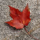 Red Leaf - Durham, NH by Eric Cook