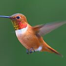 One more Humming Bird! by Kirk Photography                      Kirk Friederich