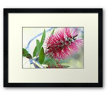 Bottle brush delight Framed Print