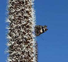 Butterfly & Blackboy by LeeoPhotography