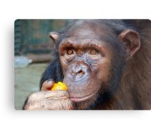 Chimp Mother Metal Print