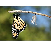 Monarch Butterfly & Chrysalis Photographic Print