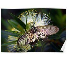 Glasswings Poster