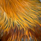 GOLDEN FEATHERS by AFROFUSION
