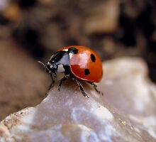 Climbing on the rock! by MimosaArt