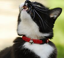 Chattering to the birds in the sky by vanStaffs