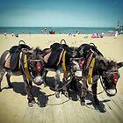 Donkeys by kathy archbold